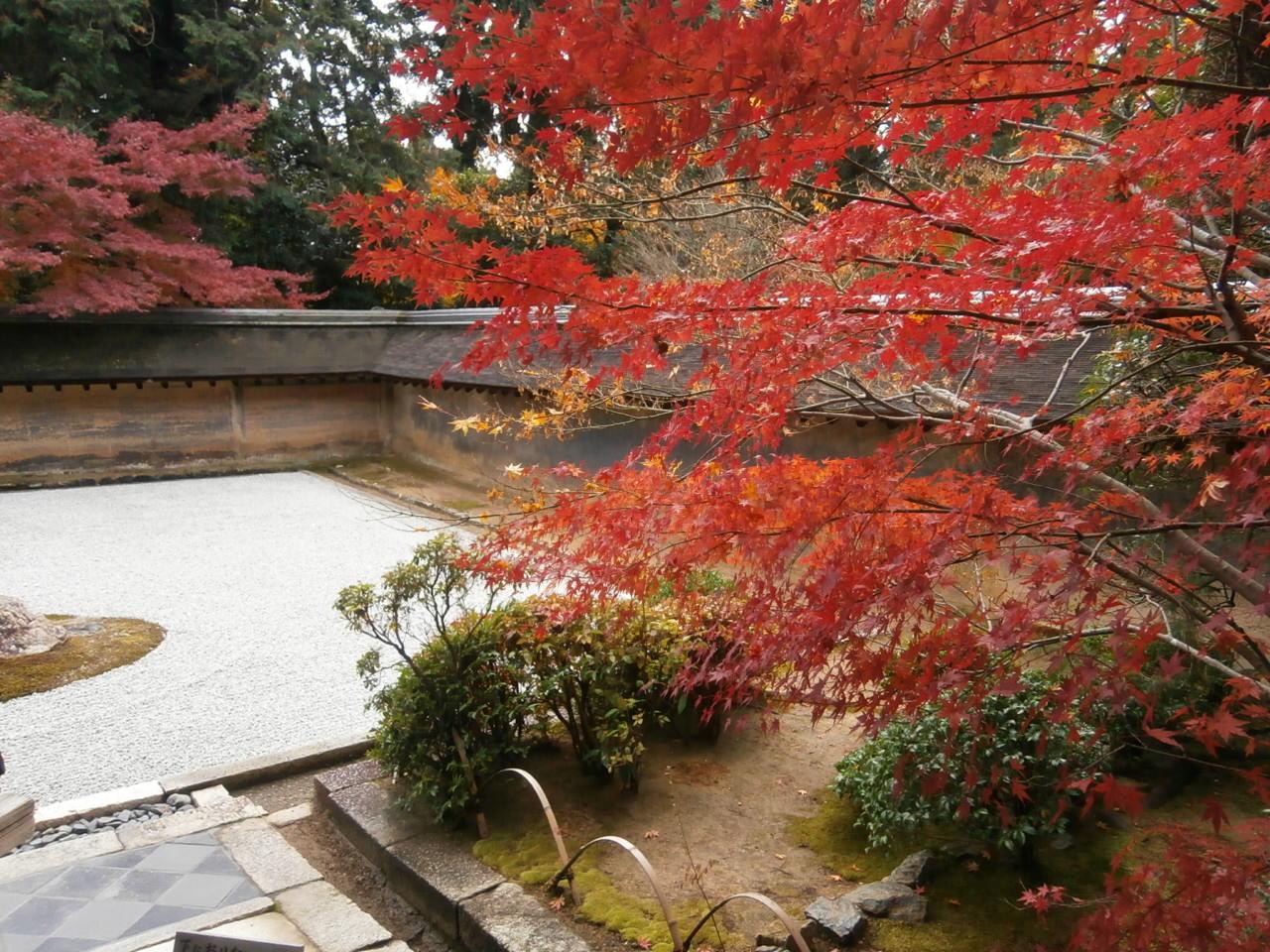 竜安寺石庭紅葉