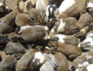 ウサギ祭り