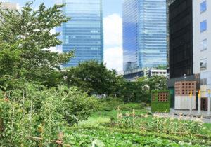 なぜ東京23区の生産緑地は1㎡ 220円なのか