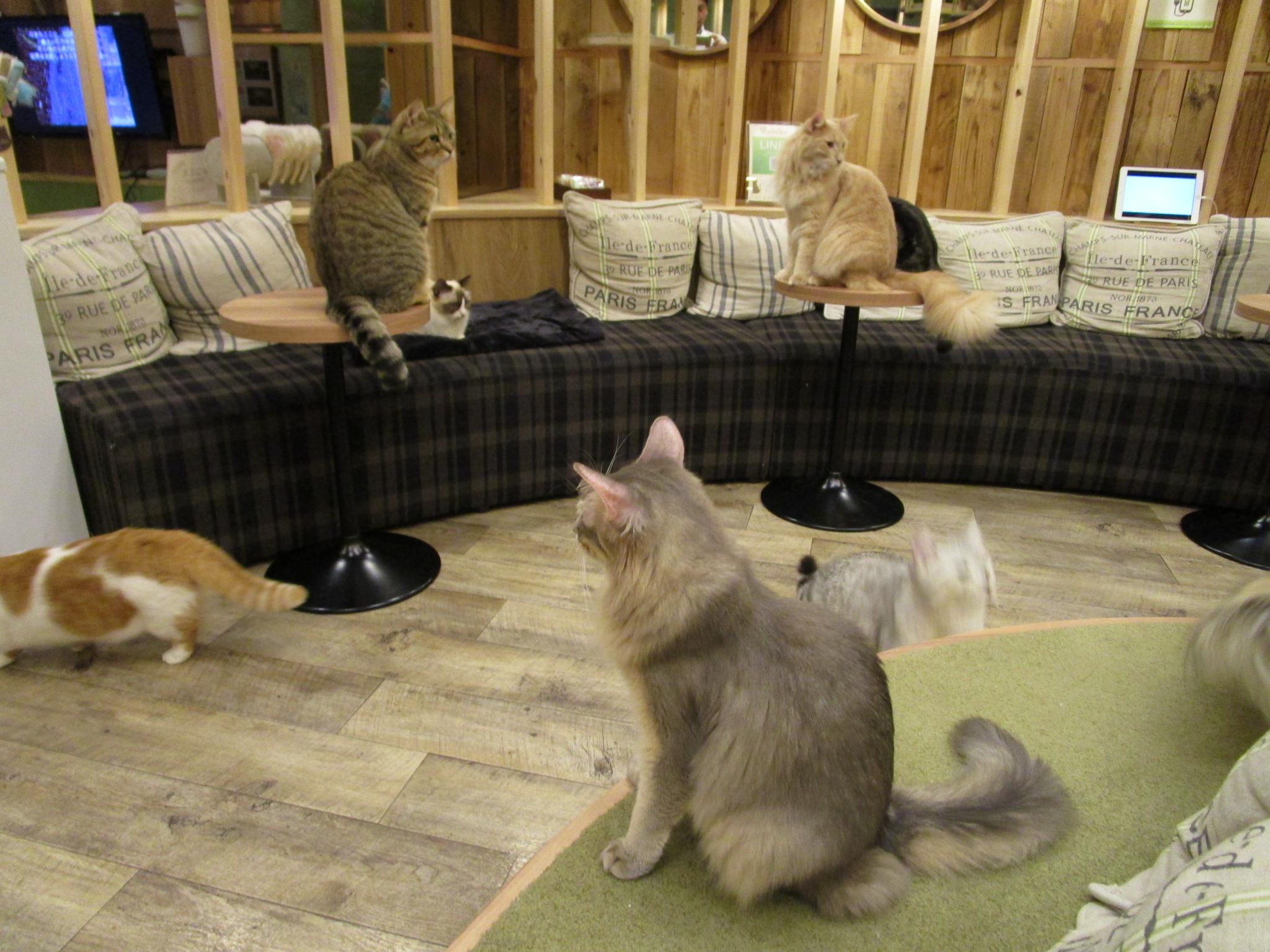 猫カフェオールスターズ